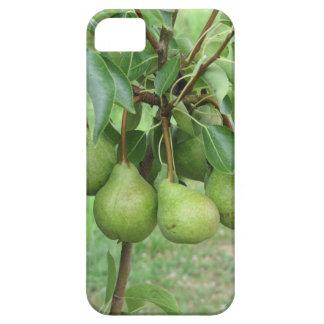 Capa Para iPhone 5 Peras verdes que penduram em uma árvore de pera