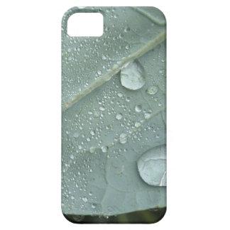 Capa Para iPhone 5 Pingos de chuva nas folhas da couve-flor