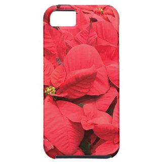 Capa Para iPhone 5 Poinsétia vermelha