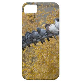 Capa Para iPhone 5 Pombos