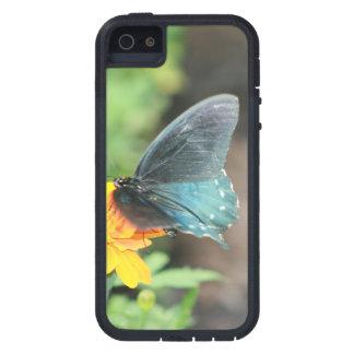 Capa Para iPhone 5 Produtos azuis do verão do Coreopsis do amarelo da