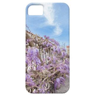 Capa Para iPhone 5 Sinensis azul de florescência das glicínias na