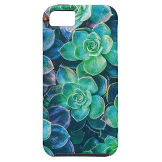 Capa Para iPhone 5 Succulents, Succulent, cacto, cactos, verde,