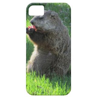 Capa Para iPhone 5 Tomate Groundhog