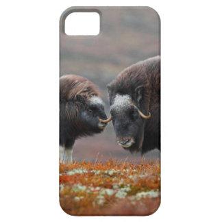 Capa Para iPhone 5 Um boi e uma vitela de Musk
