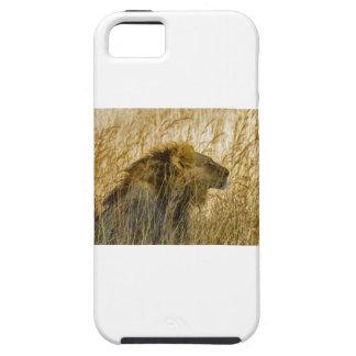 Capa Para iPhone 5 Um leão espera, Zimbabwe África