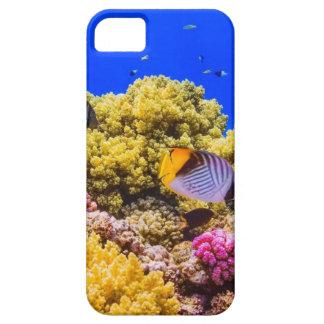 Capa Para iPhone 5 Um recife de corais no Mar Vermelho perto de