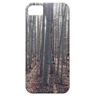 Capa Para iPhone 5 Uma floresta da faia na queda