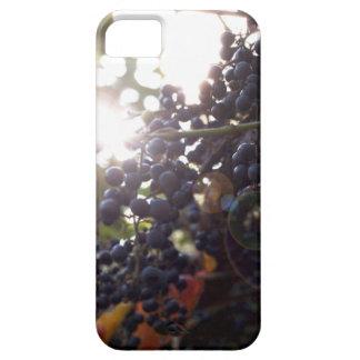 Capa Para iPhone 5 Uvas selvagens