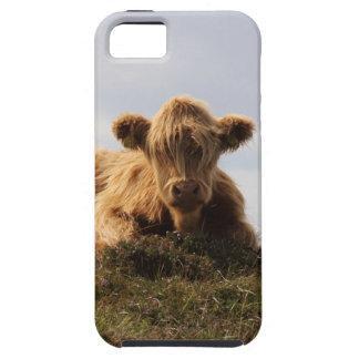 Capa Para iPhone 5 Vaca de Luing na ilha de Islay, Scotland