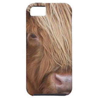 Capa Para iPhone 5 Vacas escocesas das montanhas - Scotland