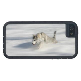 Capa Para iPhone 5 Voo em um sonho de Huskys - caso do iPhone 5