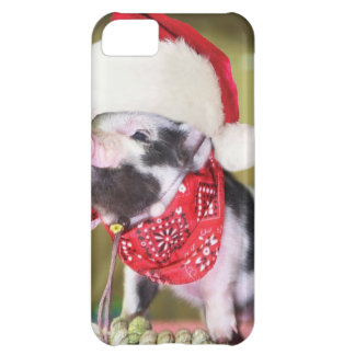 Capa Para iPhone 5C Porco Papai Noel - porco do Natal - leitão