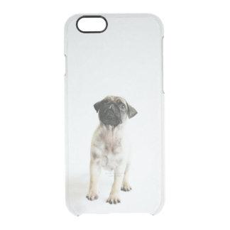 Capa Para iPhone 6/6S Transparente Filhote de cachorro minúsculo e bonito do Pug