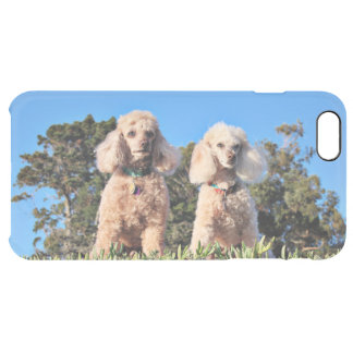 Capa Para iPhone 6 Plus Transparente Lixívia - caniches - Romeo Remy