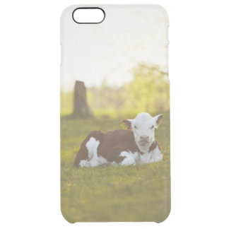 Capa Para iPhone 6 Plus Transparente Vitela que descansa na paisagem rural