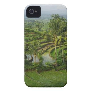 Capa Para iPhone Bali - ricefields e palmas novos do terraço