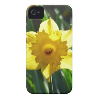 Capa Para iPhone Daffodil amarelo 03.0.g