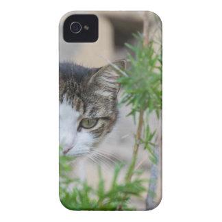 Capa Para iPhone Gato bonito para cada dia