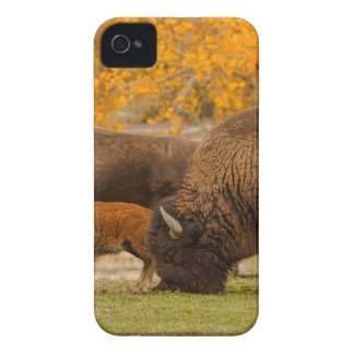 Capa Para iPhone Nação da família do bisonte