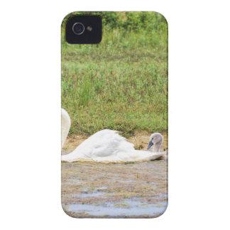 Capa Para iPhone Natação branca da cisne da mãe na linha dos