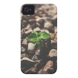 Capa Para iPhone Planta frondosa verde que começa crescer em