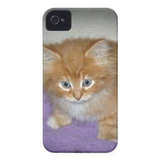 Capa Para iPhone Ponto neste gatinho