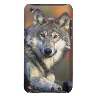 Capa Para iPod Touch lobo selvagem