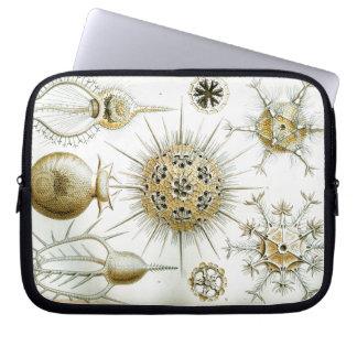 Capa Para Laptop Ernst Haeckel Phaeodaria