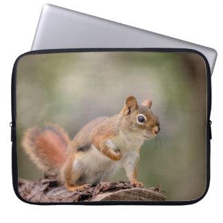 Capa Para Laptop Esquilo vermelho