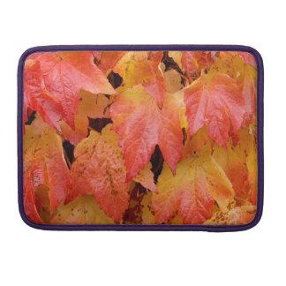 Capa Para MacBook Folhas de outono