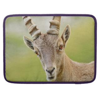 Capa Para MacBook Retrato de um íbex