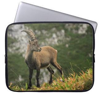 Capa Para Notebook Íbex selvagem alpino, da cabra, ou steinbock