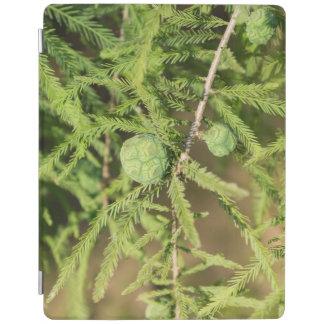 Capa Smart Para iPad Cone da semente de Cypress calvo