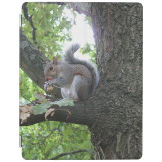 Capa Smart Para iPad Esquilo cinzento em uma árvore que come uma