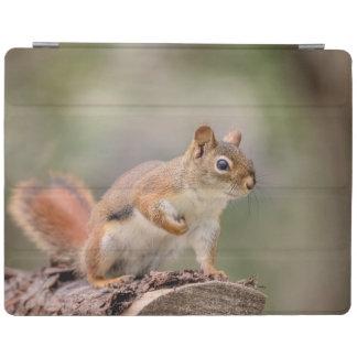 Capa Smart Para iPad Esquilo vermelho