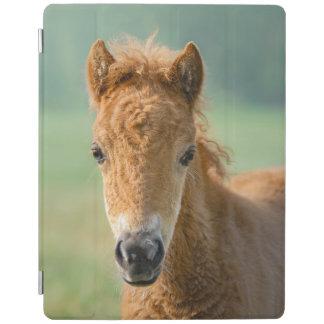 Capa Smart Para iPad Foto bonito do Frontal da cabeça de cavalo do