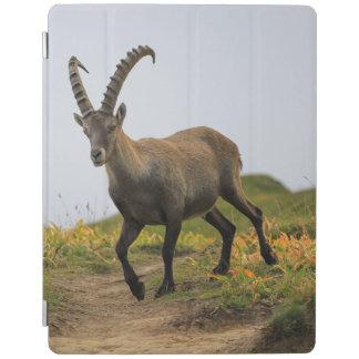 Capa Smart Para iPad Íbex selvagem alpino, da cabra, ou steinbock