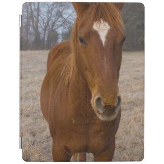 Capa Smart Para iPad Pose do cavalo
