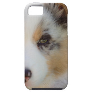 Capa Tough Para iPhone 5 Australian shepherd puppy