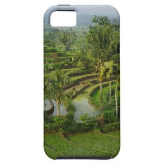 Capa Tough Para iPhone 5 Bali - ricefields e palmas novos do terraço