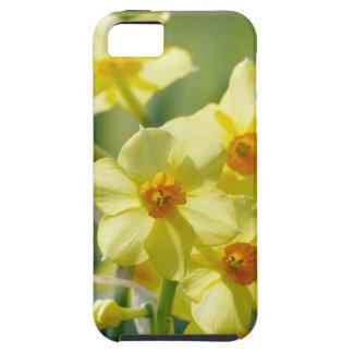 Capa Tough Para iPhone 5 Daffodils bonito, narciso 03.2_rd