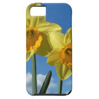 Capa Tough Para iPhone 5 Dois Daffodils amarelos 2,2