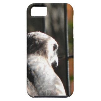 Capa Tough Para iPhone 5 Falcão em um santuário de pássaro