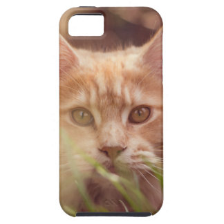 Capa Tough Para iPhone 5 gato