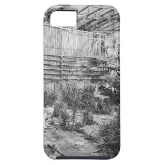 Capa Tough Para iPhone 5 gato da rua