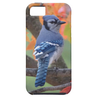 Capa Tough Para iPhone 5 Jay azul