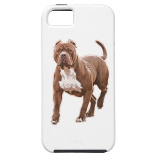 Capa Tough Para iPhone 5 Marrom do pitbull