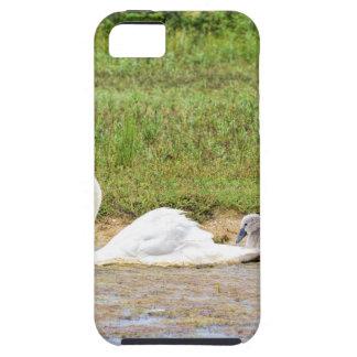 Capa Tough Para iPhone 5 Natação branca da cisne da mãe na linha dos