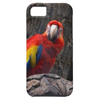 Capa Tough Para iPhone 5 O Ara do animal de estimação de Papużka do pássaro